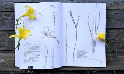 Cover image for 'Botanical Journaling and Sketching'