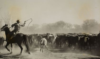 Cover image for 'Evenings at the Archives: Droving Days by Roger Steele'