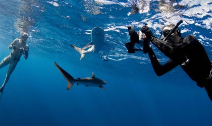 Cover image for 'Envoy: Shark Cull'