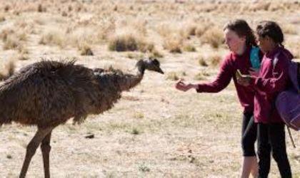 Cover image for 'DIFF 2019 – Emu Runner'