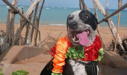 Cover image for 'Kukur Tihar – Festival of the Dog'