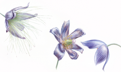 Cover image for 'immerse Two-Day Botanical Illustration Workshop'