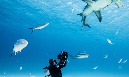 Cover image for 'Oceans Film Festival'