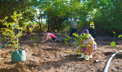 Cover image for 'Community Tree Planting – Anula'