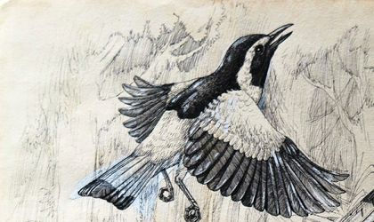 Cover image for 'Our feathered friends… the art of birds'