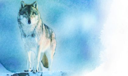 Cover image for 'Darwin Symphony Orchestra: Wolf Totem'