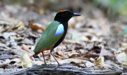 Cover image for 'Kakadu Bird Week'
